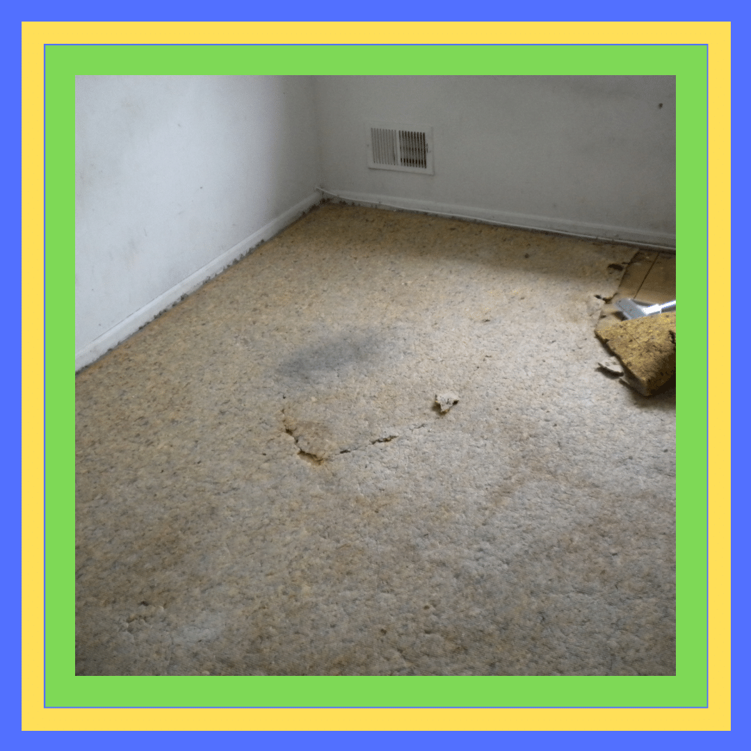 Carpet Mould and Odour Removal